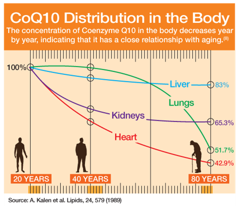 CoQ10 Distribution in the Body